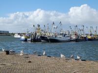 haven lauwersoog 2