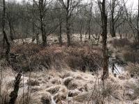natuur bij Schipborg, dr.