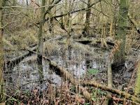 waterlandschaop.l'meer